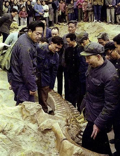 1981年,董枝明(左一)在自貢恐龍化石挖堀現場考察,出處:自貢網