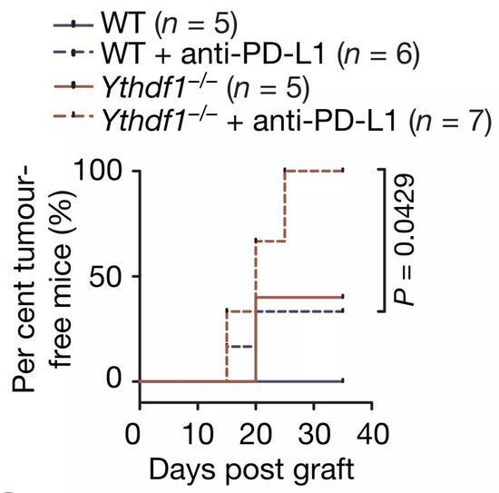 联合PD-L1抗体,效果杠杠的