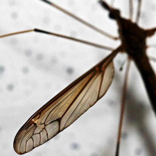 为了能到高层偷袭你,蚊子特意修