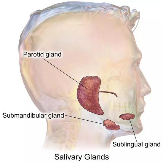 Filato便提出了将自体腮腺管移植治疗眼干的方法。