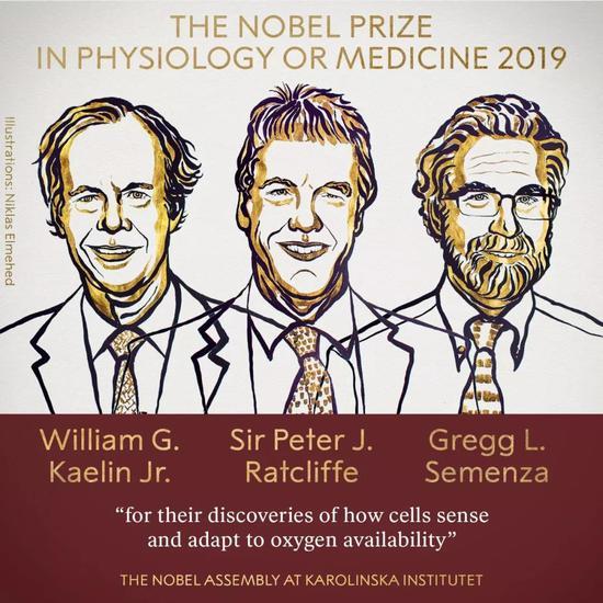 2019年诺贝尔生理学或医学奖得主:小威廉·凯林(William G。 Kaelin Jr。),彼得·J·拉特克利夫爵士(Sir Peter J。 Ratcliffe)和美国医学家格雷格·L·塞门扎(Gregg L。 Semenza)