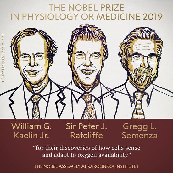 诺贝尔生理学或医学奖揭晓 我们为什么关注诺贝尔奖诺贝尔生理学诺贝尔奖为什么