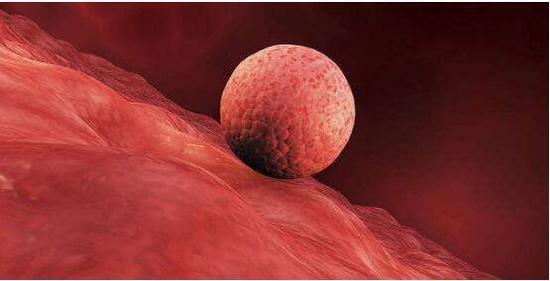 胚胎着床,来源于网络
