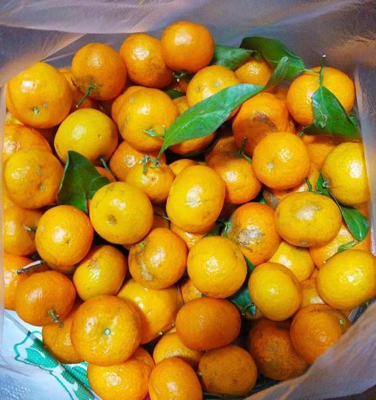 砂糖橘这样一袋,只要五块钱!我知道后,并不开心,有点担心。(摄于2月3日)