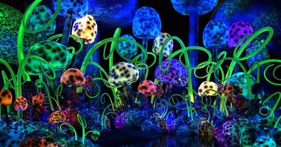 让人产生幻觉的毒蘑菇,可以治疗抑郁症?
