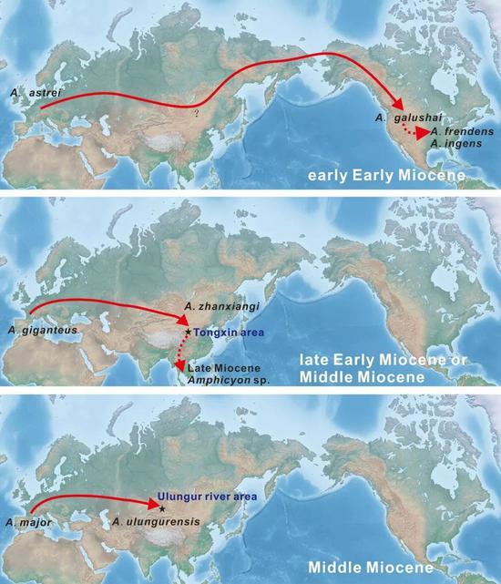 犬熊属在欧亚北美之间的迁徙,更替示意图。