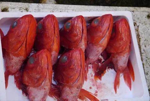 无色无味无药可解,你可能也中过世界上最常见的海鲜毒