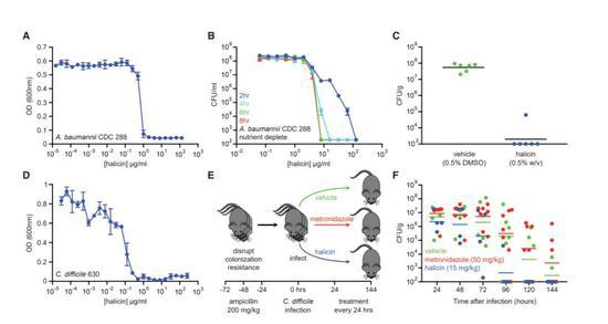 Halicin在小鼠感染模型上显示有效