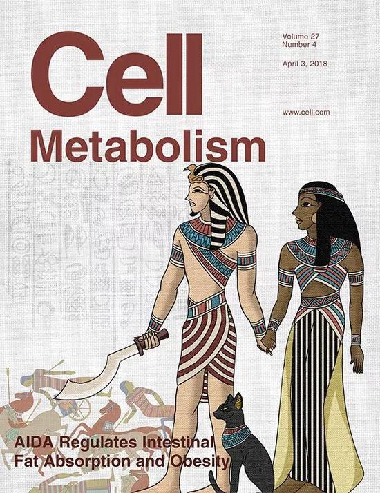 《细胞代谢》杂志封面。图中女性名叫Aida,是古埃塞俄比亚公主。图片借Aida与埃及将军Radames爱情故事,比喻Aida基因抑制脂肪吸收的机制