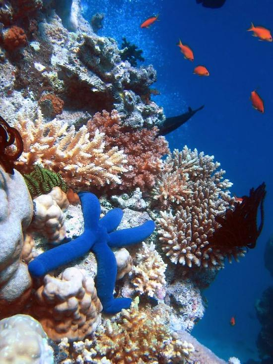 大堡礁是世界上最大最长的珊瑚礁群  Richard Ling / Wikimedia Commons