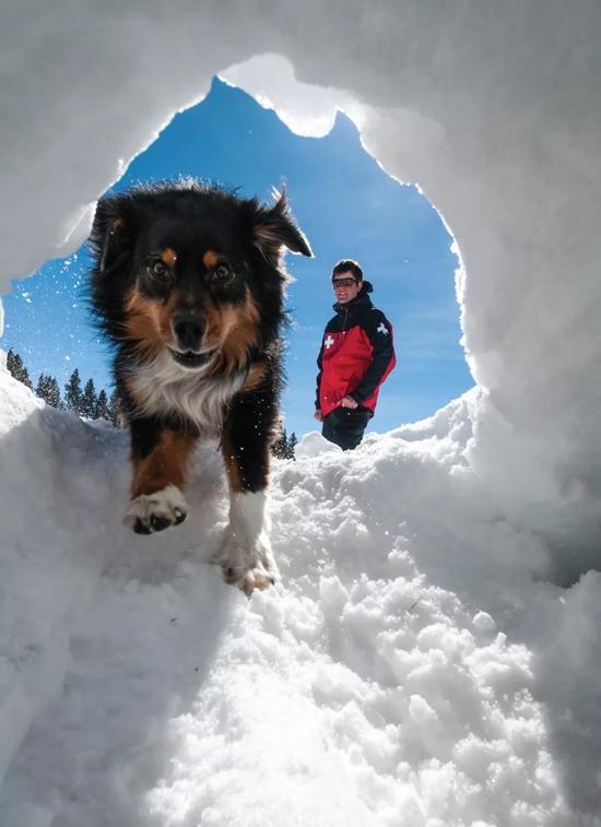 人类需要情感支持,大部分时候来自于人类同伴。但狗同样给予我们这些,我们也是狗狗们最大的精神支柱。(图片来源:Kennan HarveyAurora Photos。)