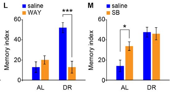 用藥激活HTR6記憶力就回去了(左)