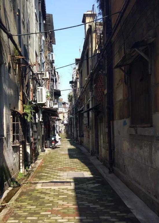 江汉路,阳光照耀下的青苔。(摄于2月9日)