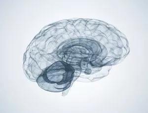 有钱有大计划,就能做出基础科学突破性成果吗?脑计划神经科学基础科学