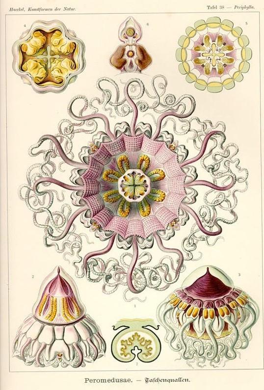 各种各样的水母