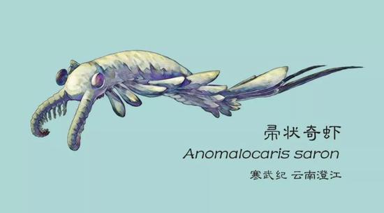 寒武纪海中最靓的仔:奇虾的复原图(图片来源:谭超)