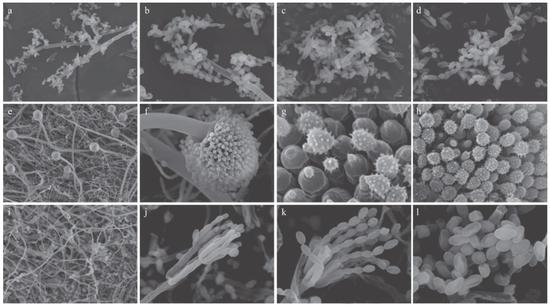冰箱裏檢出的微生物。圖片來源:《家庭冰箱中的微生物種類調查》