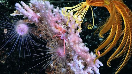 这些深海细菌,能绕过人体免疫系统