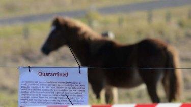 亨德拉疫情在澳大利亚昆士兰暴发后,一些当地马匹被隔离(smh.com.au)