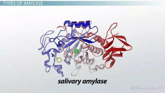 唾液澱粉酶的結構示意圖來源:見水印