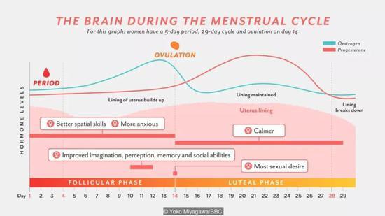 在月经周期中,女性大脑中不同能力随时间的变化(图片来源:Yoko Miyagawa/BBC)