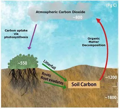 图1 陆地碳循环过程(基于网络图片修改)