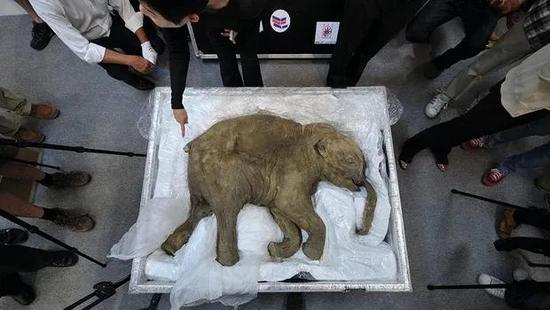 既能复活猛犸象,又能复活猫王,科学家们的