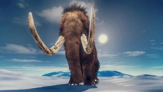猛犸象一生的旅行足迹,都刻进了它的长牙里
