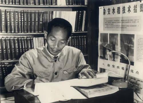 杂交水稻的诞生,离不开袁隆平等科学家们辛苦卓绝的努力(图片来源