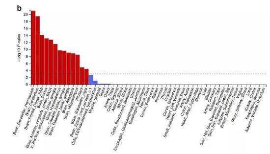 ▲与早起有关的基因位点大多和中枢神经系统、大脑发育有关,主要表达在视网膜、后脑、下丘脑和垂体中(图片来源:参考资料[1])