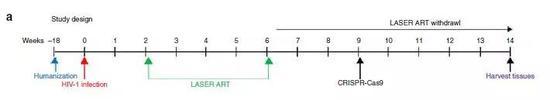 ▲感染并施用疗法的研究示意图(图片来源:参考资料[1])