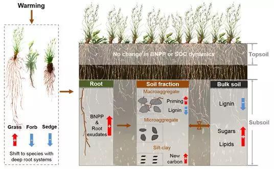 图5 气候变暖对青藏高原高寒草甸不同土层土壤有机碳周转的影响