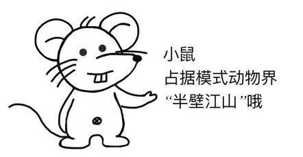小鼠那么可爱!怎么可以用小鼠做实验?zt