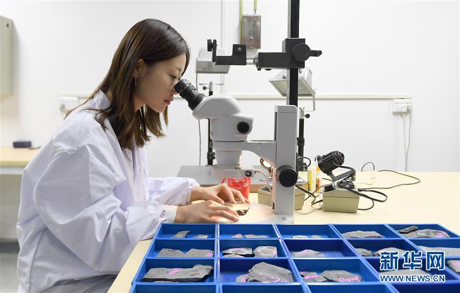 """西北大學地質學系的學生用顯微鏡對""""清江生物羣""""中的化石進行觀察研究(4月8日攝)。新華社記者 劉瀟攝"""