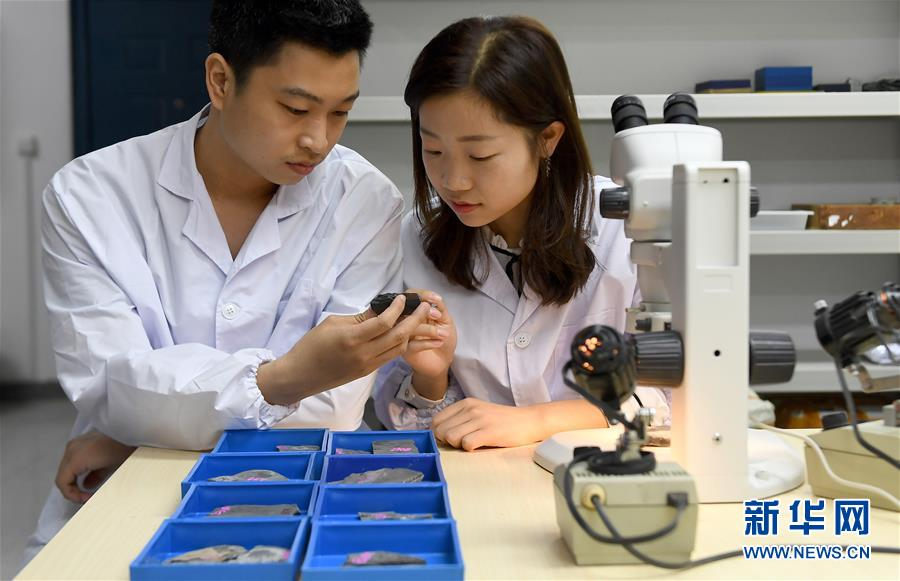 """西北大學地質學系的學生在對""""清江生物羣""""中的化石進行觀察研究(4月8日攝)。新華社記者 劉瀟攝"""
