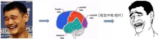 大脑视觉中枢处理视觉信息的模式:选择性失明、特征性提取 | 作者改编自网络素材