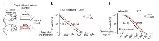 ▲这两种药物的组合(红色)能延长小鼠的生命(图片来源:《Nature Medicine》)