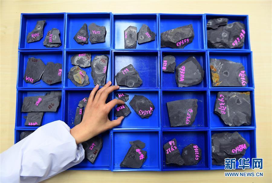 """西北大學地質學系的學生在查找""""清江生物羣""""化石(4月8日攝)。新華社記者 劉瀟攝"""