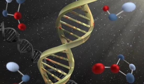 """雄性比雌性寿命短,是因为Y染色体有""""毒""""?"""