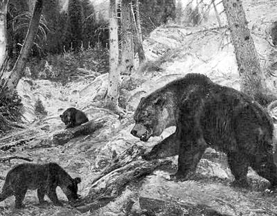 重构线粒体DNA谱系发现:人类与洞熊灭绝存在重大关系