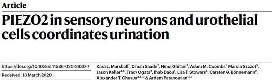 《【多彩联盟安卓版登录】今日《自然》:憋尿的感觉是怎么来的?》