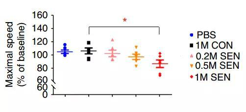 最大步行速度下降 红:移植衰老细胞1×106个,黄:移植衰老细胞0.5×106个,粉:移植衰老细胞0.2×106个,黑:移植正常细胞1×106个,蓝:注射PBS的对照组