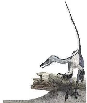 灵巧简手龙生态复原图(图片来源:徐星,秦子川等)