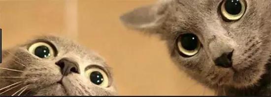 皇家普金赌场·鸳鸯眼小猫辗转多家终于找到命中注定铲屎官:等了很久终于等到你