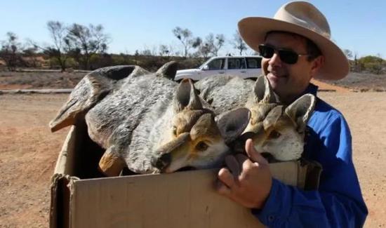 """澳洲野猫成患,动物保护者建""""防猫长城""""把本土物种圈养成白痴"""