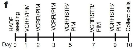 ▲在培养细胞的不同时间点,添加分别调节不同发育信号的小分子化合物,仅需10天,就可以把人的皮肤成纤维细胞转变为CiPCs