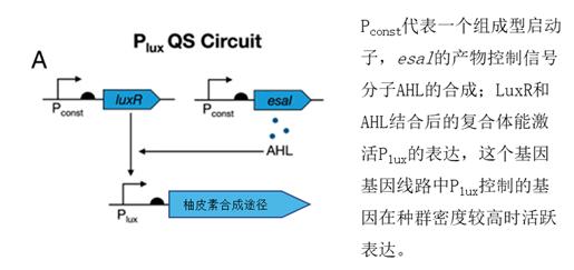 控制柚皮素合成的基因线路(修改自Christina V。 Dinh et al。, 2019)