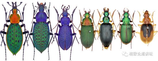 对人类社会而言,苍蝇其实是益虫