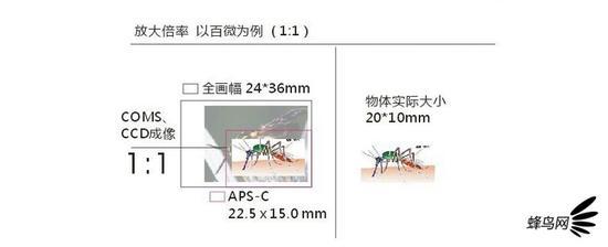 tt玩法 - 抗战中日军为什么不直接攻进四川,直捣重庆?看完这段你就明白了