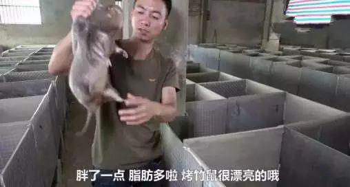 华农兄弟刘苏良